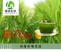 碱性食物之王郑州臻研大麦若叶青汁代加工厂家
