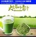 河南鄭州益生元青汁貼牌代加工,鄭州大麥若葉青汁固體飲料生產廠家,青汁OEM代加工
