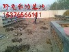 四川杂交野兔养殖场,杂交野兔苗的价格,提供养殖技术