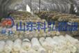 微波干燥设备,国内微波干燥专业技术整体解决方案专家?