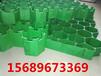 天津塑料植草板,让绿成为广大市民的幸福底色