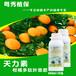 柑橘用什么叶面肥效果好柑橘多肽叶面肥进口柑橘专用叶面肥