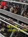 全国供应鸡笼_自动化鸡笼设备_阶梯式蛋鸡笼