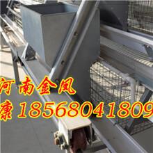 供应阶梯式蛋鸡笼子_A型阶梯鸡笼子_鸡笼阶梯式蛋鸡笼子图片