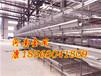 河南自動化養雞設備,層疊式雞籠,金鳳雞籠廠,國際先進養雞設備