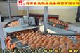 福建自动化养鸡设备_金凤鸡笼厂,蛋鸡养鸡设备,层叠式鸡笼