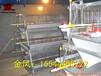 重疊雞籠設備4層10萬只西平金鳳雞籠荊州最新報道