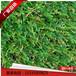 厂家直销人造景观秋草皮仿真绿化假草皮幼儿园加密地毯草坪
