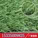 地毯塑料假草坪幼儿园专用室内外场地人工草皮