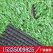 仿真草坪人造草皮仿真户外草坪房顶装饰人造草坪10mm展会专用