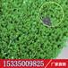 仿真草坪人造草坪人工草皮塑料假草坪学校楼顶阳台绿色地毯