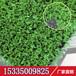 浙江专用仿真人造草坪屋顶装饰仿真草皮开网丝环保绿化