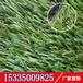 儿童区地铺人造草坪仿真草坪绿化四色加密秋草地毯草皮厂家
