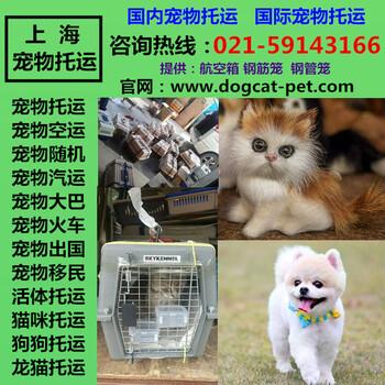 上海国际宠物托运公司国际快运物流业务