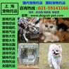 上海宠物运输