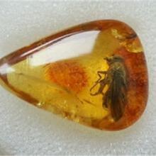 虫琥珀在线评估鉴定机构图片