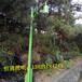 中山恒通照明非标订制LED庭院灯竹节灯园林路灯花园灯