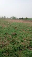 黄陂500亩优质农用地转让