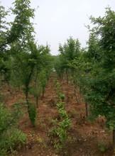 武汉江夏山坡260亩农庄土地转让