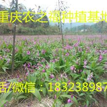 重庆农之福种植白芨重楼养殖杂交野兔刺猬签订合同现金收购