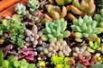 多肉植物進口香港到大陸包稅進口清關