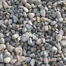 厂家直销核污水处理用鹅卵石抛光鹅卵石园林铺路鹅卵石图片