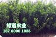 荊州脆紅李樹苗環境要求。荊州脆紅李樹苗基地直銷
