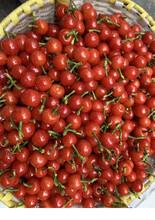 黔西南甜樱桃树苗图片