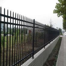 西青区铁艺围栏,铁艺大门加工电话图片