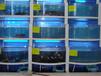无锡鱼缸制作无锡定做鱼缸无锡海鲜城海鲜池安装无锡大闸蟹缸制作