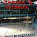 镀锌钢丝牛栏网/甘肃金昌圈山养羊牛栏网/河北镀锌牛栏网厂家现货供应