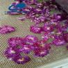 玫瑰花干燥設備