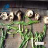 云南菌菇种类