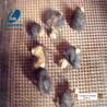 菌菇烘干机