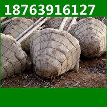 鄂州园林移树机大型移树机厂家热卖
