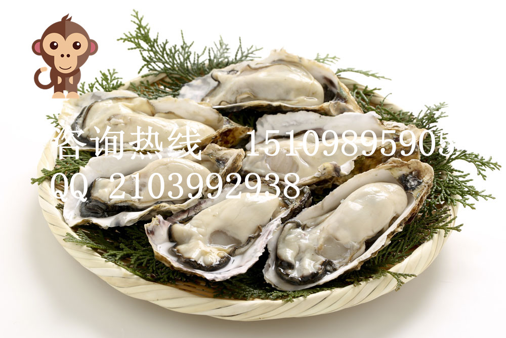 天津进口牡蛎粉分装贴牌生产厂家黄精牡蛎固体饮品加工专业快速