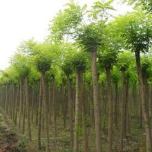河北浩林绿化
