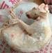 冷冻白条兔价格冷冻兔头批发厂家冷冻兔里脊供应商进口兔肝批发产地
