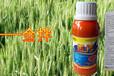 小麦拌种剂