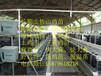武宁县纯种绿壳蛋鸡苗哪里可以买到