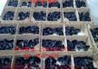 靖州纯种绿壳蛋鸡苗菜市场批发价格