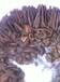 水蛭养殖提供技术