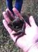水蛭新手养殖户入群交流