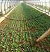 全能蔬菜播種機出苗全香菜播種機免間苗精播機