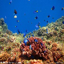 港澳4天3晚海洋公园特卖进行中538元全含