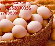 蛋壳颜色发白怎么办图片