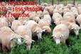 反刍动物饲料添加剂