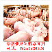 养猪用什么催肥效果好