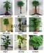 提供绿植花卉租赁租摆服务-专业养护-价格适中