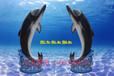 玻璃钢仿真海洋鲸鱼雕塑海洋馆游乐园公园树脂摆件